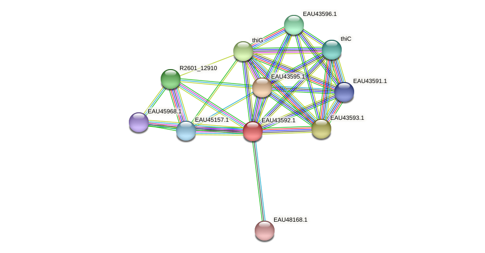 R2601_23535 protein (Pelagibaca bermudensis) - STRING interaction network
