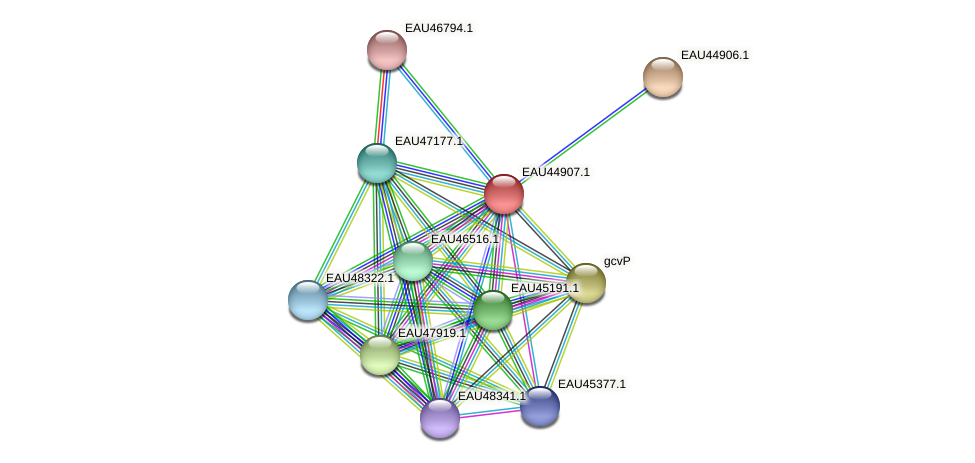 R2601_23635 protein (Pelagibaca bermudensis) - STRING interaction network