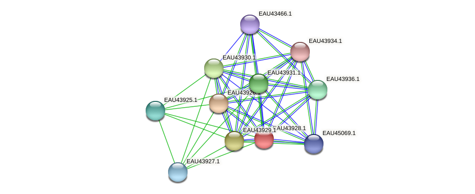 R2601_23955 protein (Pelagibaca bermudensis) - STRING interaction network