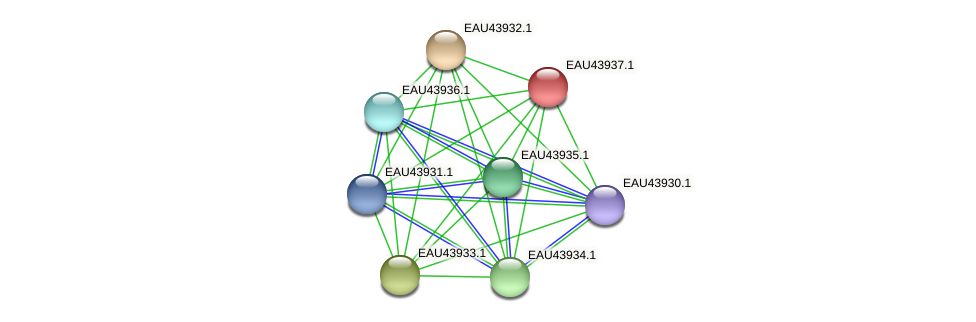 R2601_24000 protein (Pelagibaca bermudensis) - STRING interaction network