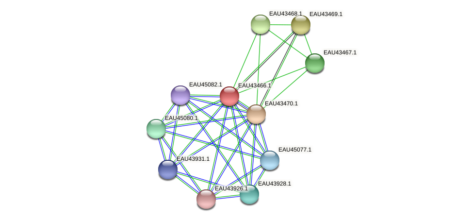 R2601_24005 protein (Pelagibaca bermudensis) - STRING interaction network