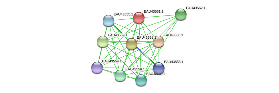 R2601_24070 protein (Pelagibaca bermudensis) - STRING interaction network