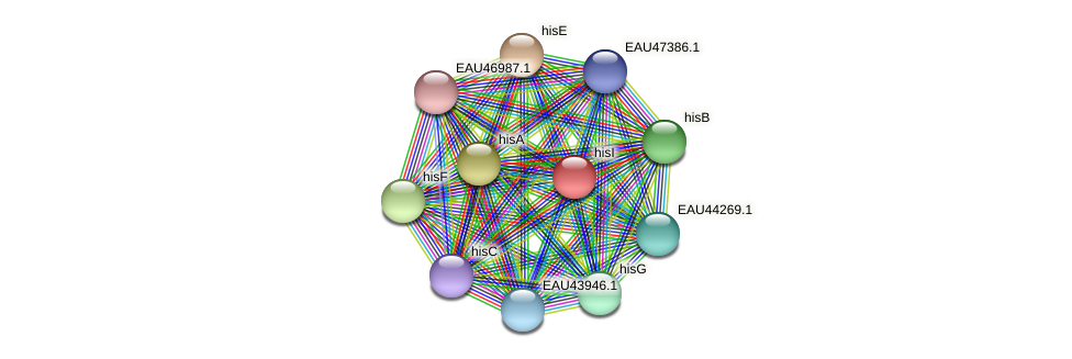 hisI protein (Pelagibaca bermudensis) - STRING interaction network