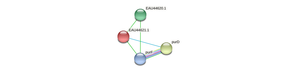 R2601_24175 protein (Pelagibaca bermudensis) - STRING interaction network