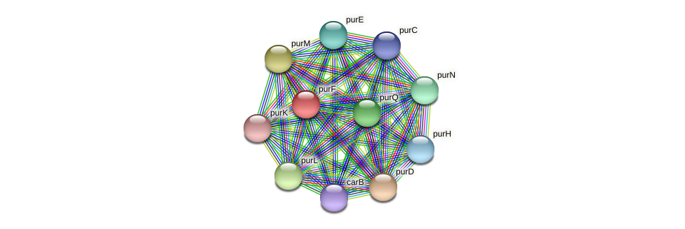 purF protein (Pelagibaca bermudensis) - STRING interaction network