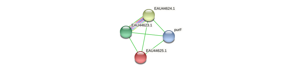 R2601_24195 protein (Pelagibaca bermudensis) - STRING interaction network