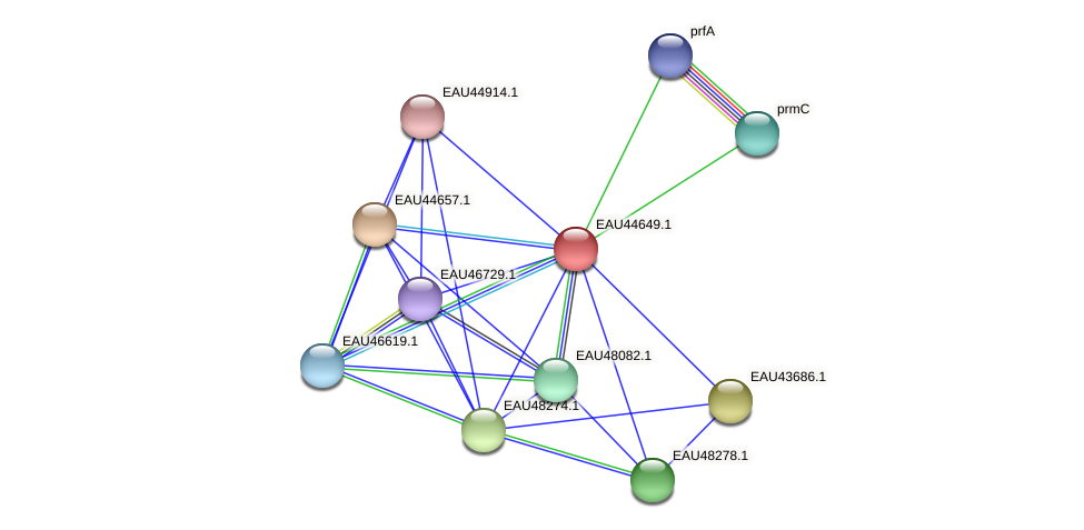 R2601_24315 protein (Pelagibaca bermudensis) - STRING interaction network