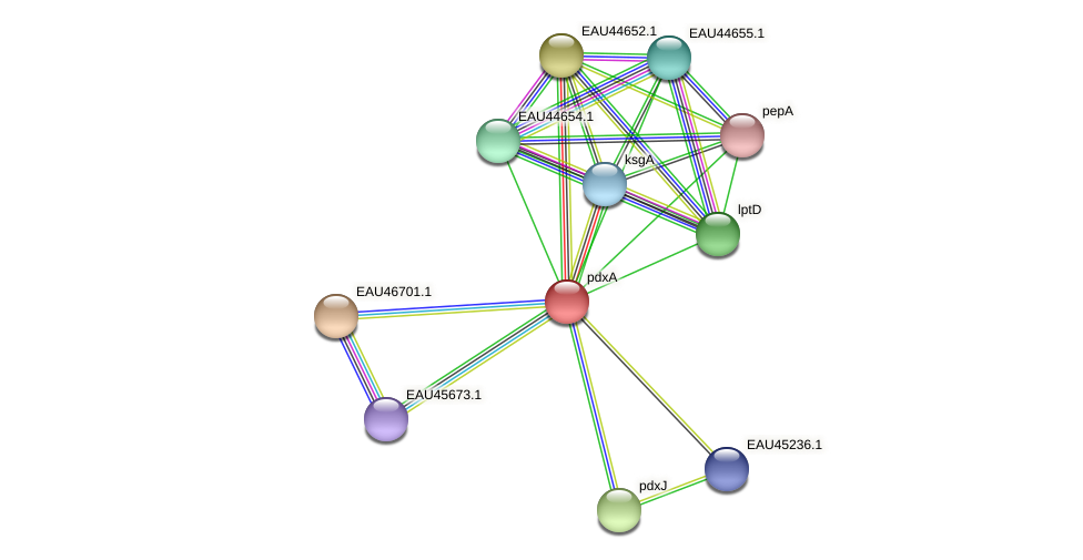 R2601_24325 protein (Pelagibaca bermudensis) - STRING interaction network