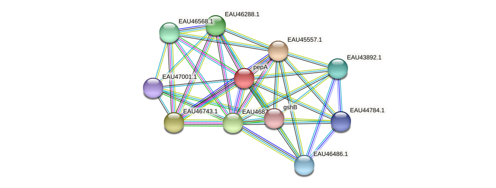 pepA protein (Pelagibaca bermudensis) - STRING interaction network