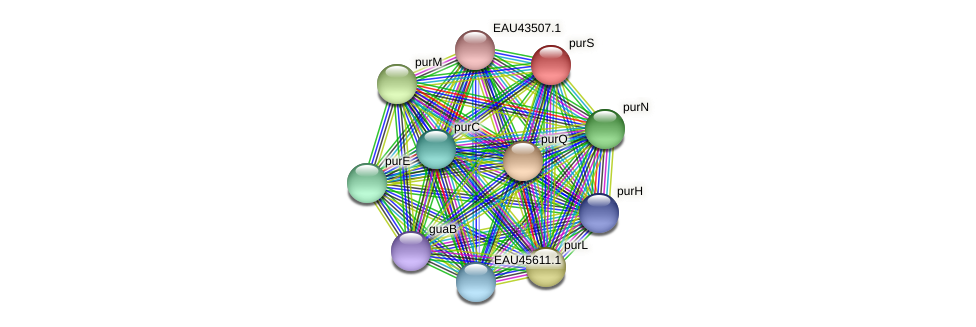 purS protein (Pelagibaca bermudensis) - STRING interaction network