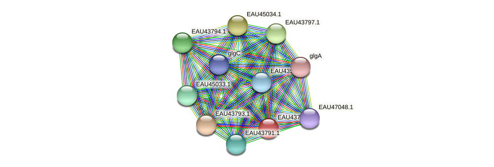 R2601_24589 protein (Pelagibaca bermudensis) - STRING interaction network