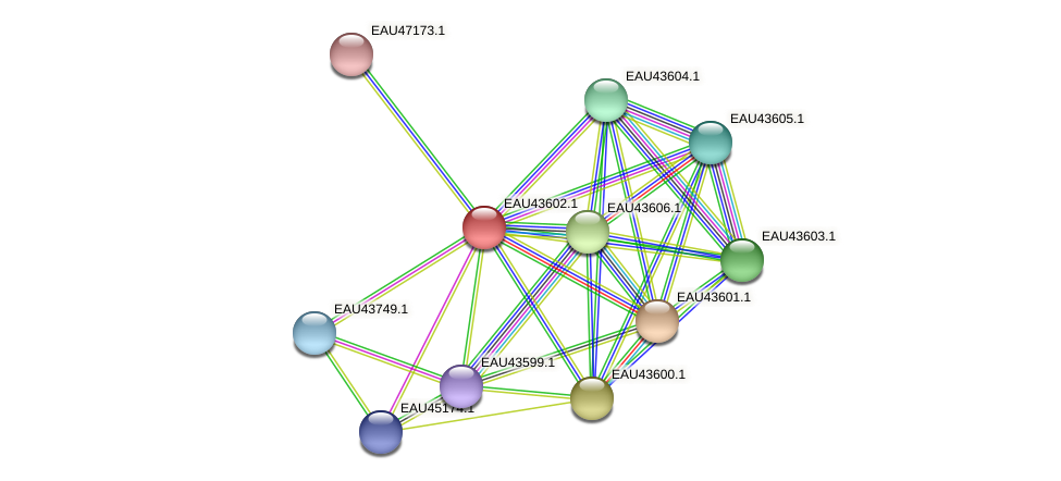 R2601_24634 protein (Pelagibaca bermudensis) - STRING interaction network