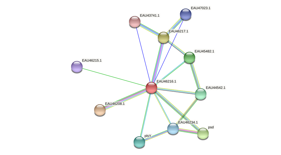R2601_25001 protein (Pelagibaca bermudensis) - STRING interaction network