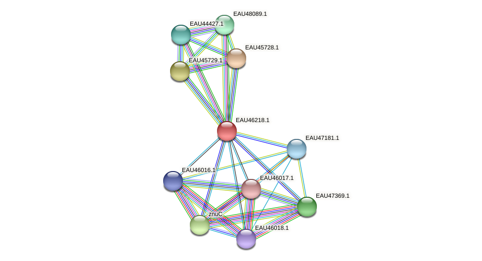 R2601_25011 protein (Pelagibaca bermudensis) - STRING interaction network