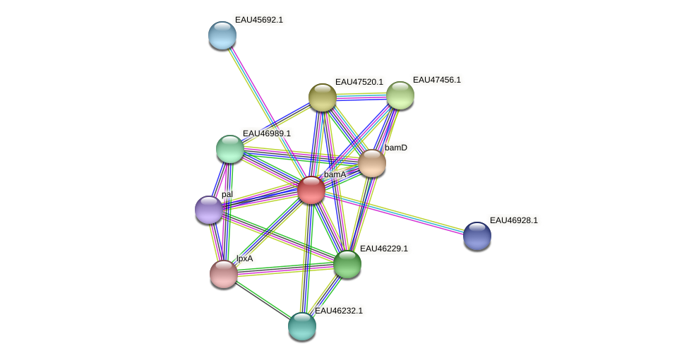 bamA protein (Pelagibaca bermudensis) - STRING interaction network