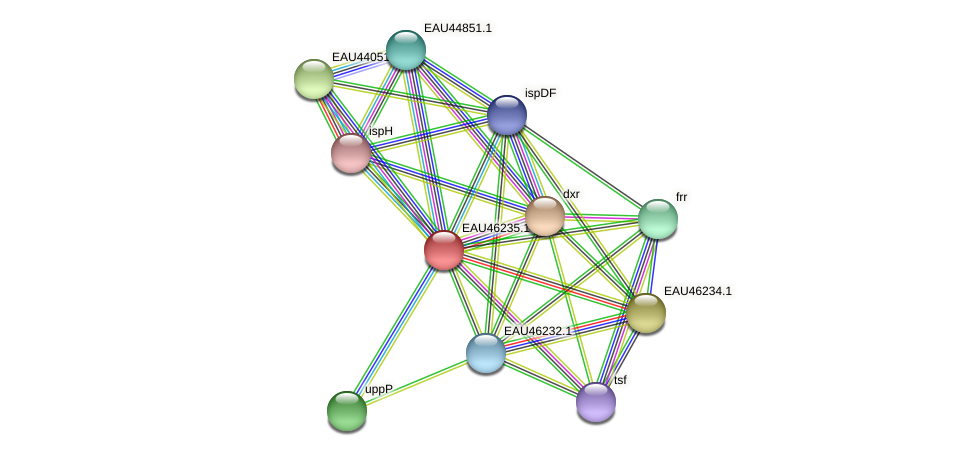 R2601_25096 protein (Pelagibaca bermudensis) - STRING interaction network