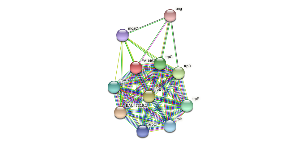 R2601_25211 protein (Pelagibaca bermudensis) - STRING interaction network