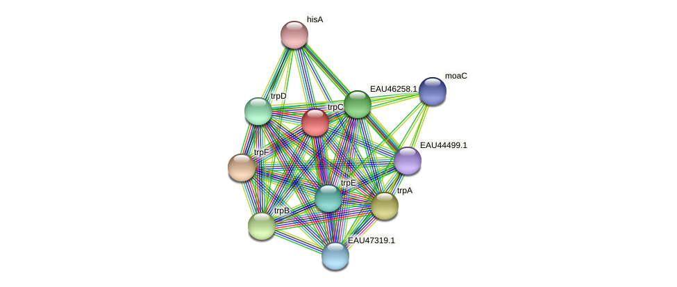 trpC protein (Pelagibaca bermudensis) - STRING interaction network