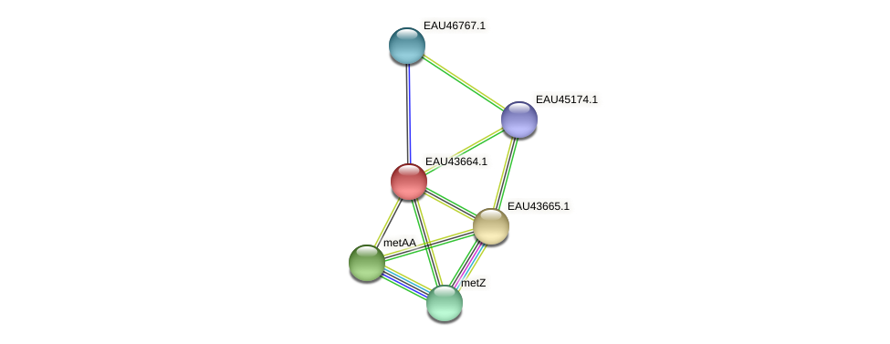 R2601_25531 protein (Pelagibaca bermudensis) - STRING interaction network