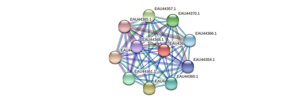 R2601_25561 protein (Pelagibaca bermudensis) - STRING interaction network