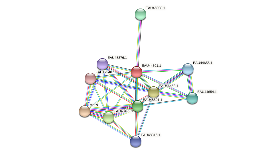 R2601_25616 protein (Pelagibaca bermudensis) - STRING interaction network