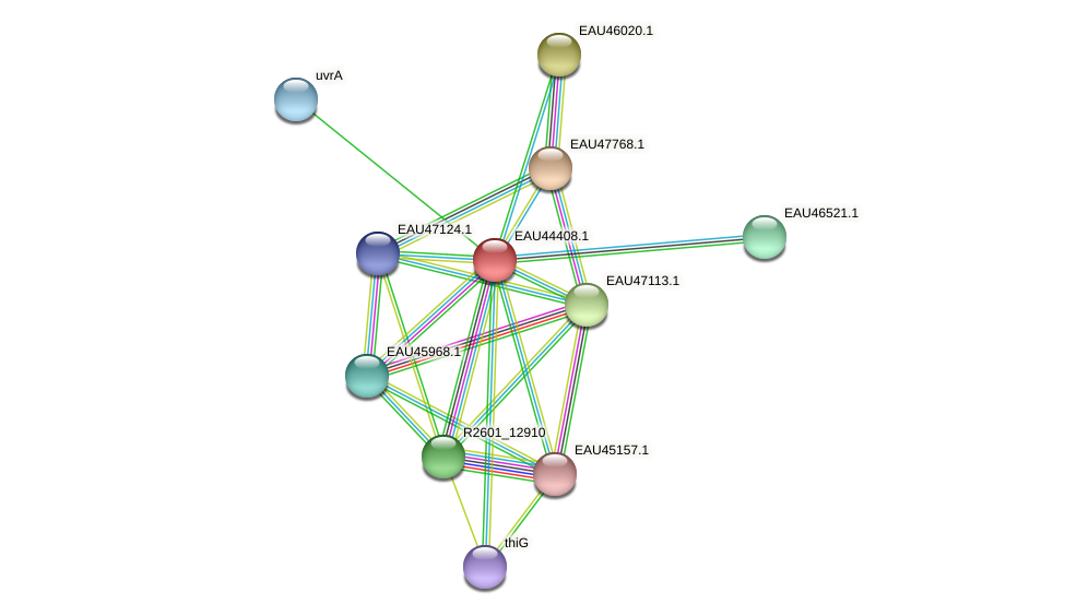 R2601_25701 protein (Pelagibaca bermudensis) - STRING interaction network