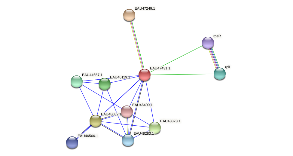 R2601_25871 protein (Pelagibaca bermudensis) - STRING interaction network