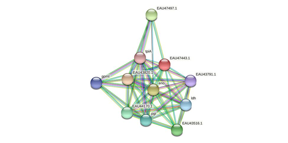 R2601_25931 protein (Pelagibaca bermudensis) - STRING interaction network