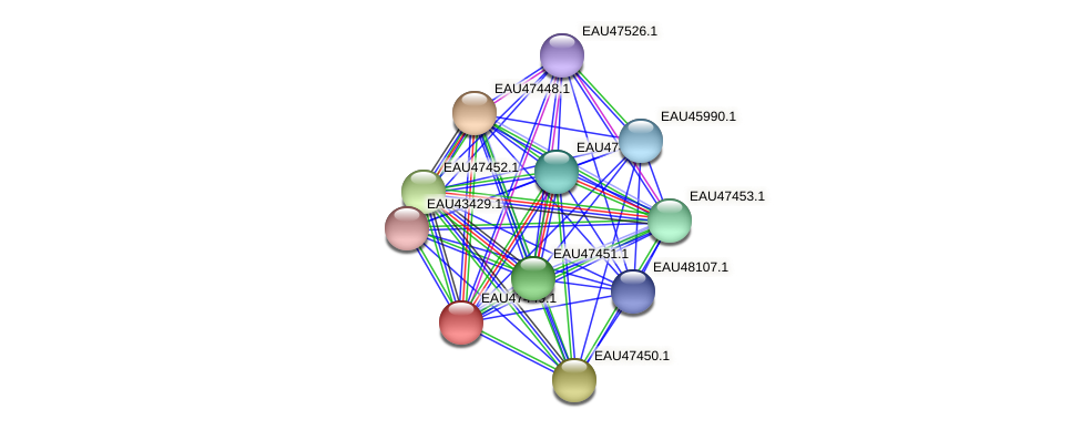 R2601_25961 protein (Pelagibaca bermudensis) - STRING interaction network