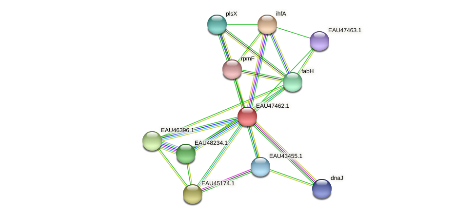 R2601_26026 protein (Pelagibaca bermudensis) - STRING interaction network