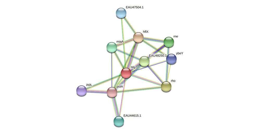 hfq protein (Pelagibaca bermudensis) - STRING interaction network