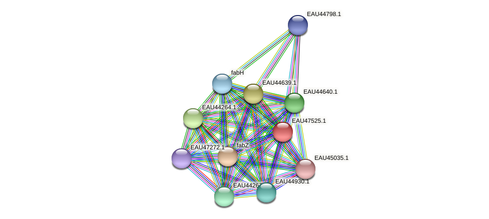 R2601_26341 protein (Pelagibaca bermudensis) - STRING interaction network