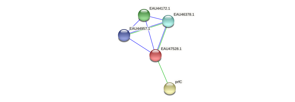 R2601_26356 protein (Pelagibaca bermudensis) - STRING interaction network