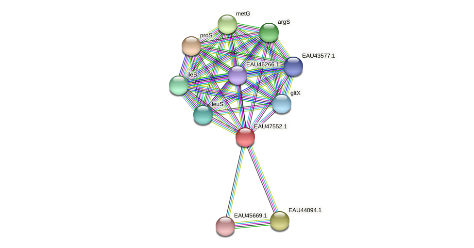 R2601_26476 protein (Pelagibaca bermudensis) - STRING interaction network