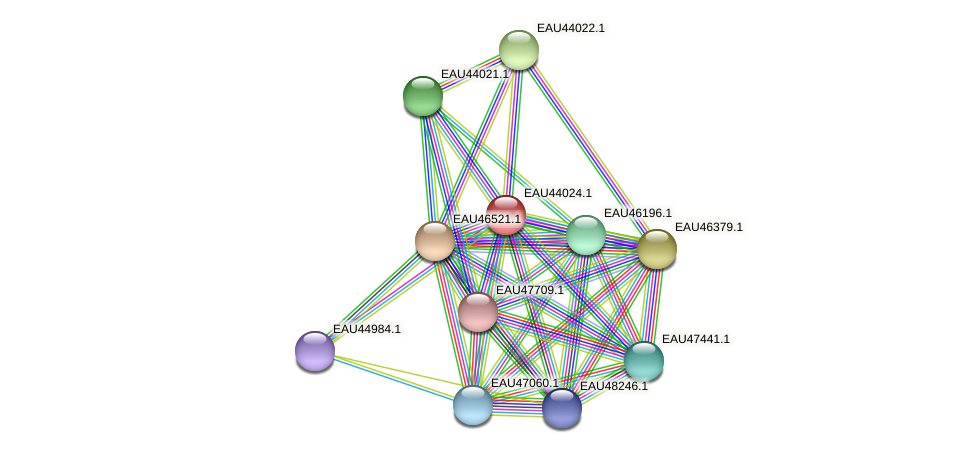 R2601_26626 protein (Pelagibaca bermudensis) - STRING interaction network