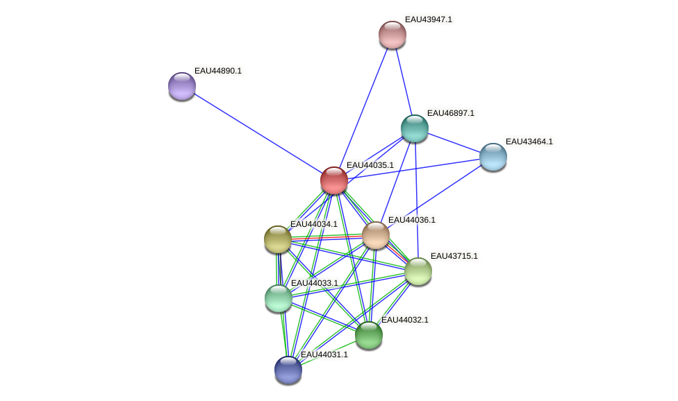 R2601_26681 protein (Pelagibaca bermudensis) - STRING interaction network