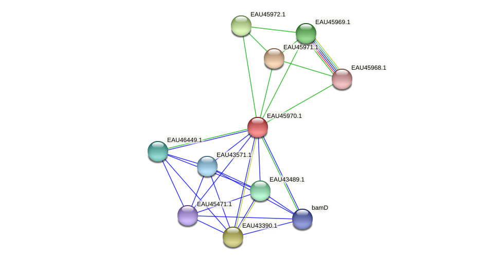 R2601_26891 protein (Pelagibaca bermudensis) - STRING interaction network
