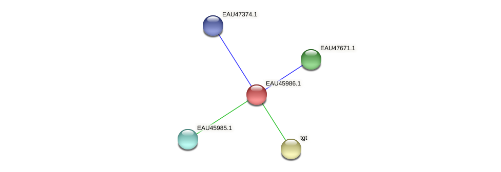 R2601_26971 protein (Pelagibaca bermudensis) - STRING interaction network