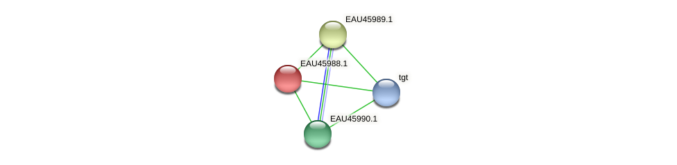 R2601_26981 protein (Pelagibaca bermudensis) - STRING interaction network