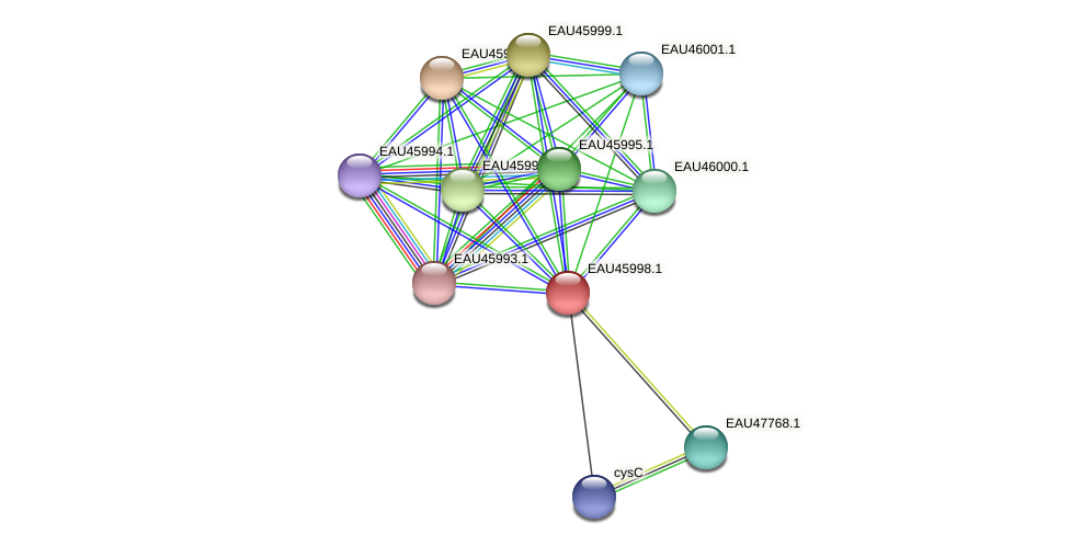 R2601_27031 protein (Pelagibaca bermudensis) - STRING interaction network