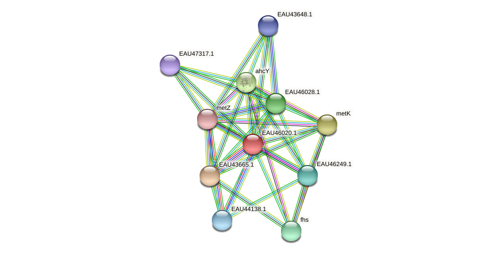 R2601_27141 protein (Pelagibaca bermudensis) - STRING interaction network