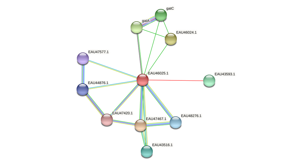 R2601_27166 protein (Pelagibaca bermudensis) - STRING interaction network