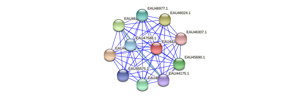 R2601_27193 protein (Pelagibaca bermudensis) - STRING interaction network