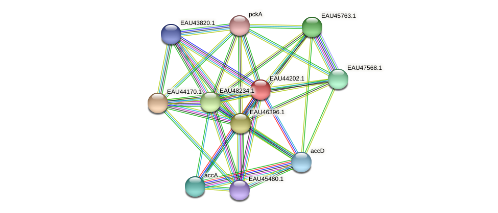 R2601_27203 protein (Pelagibaca bermudensis) - STRING interaction network