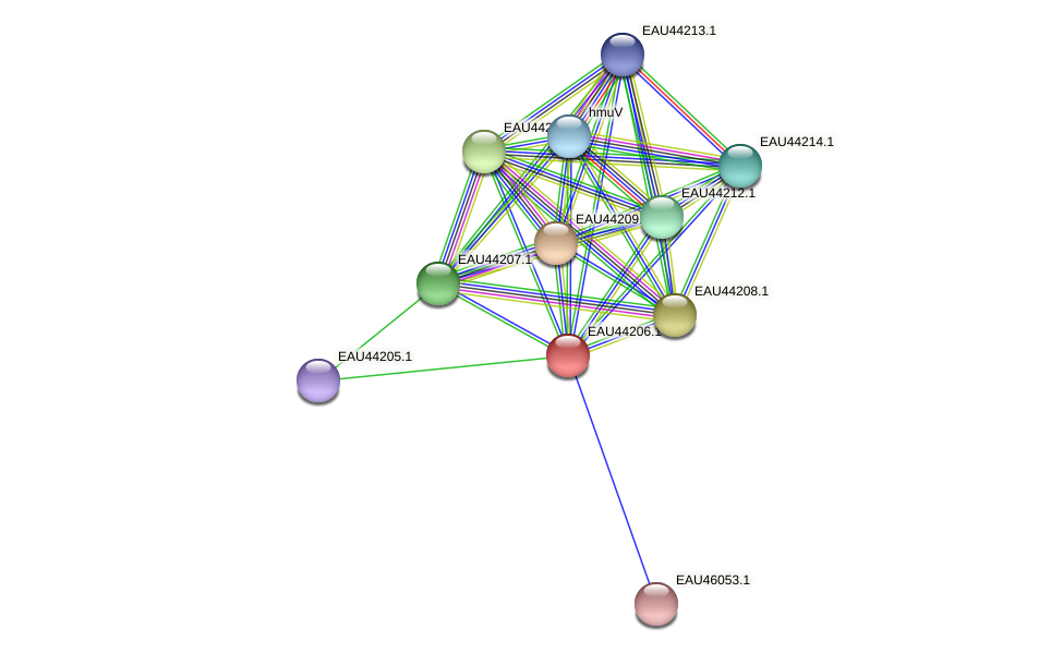 R2601_27223 protein (Pelagibaca bermudensis) - STRING interaction network