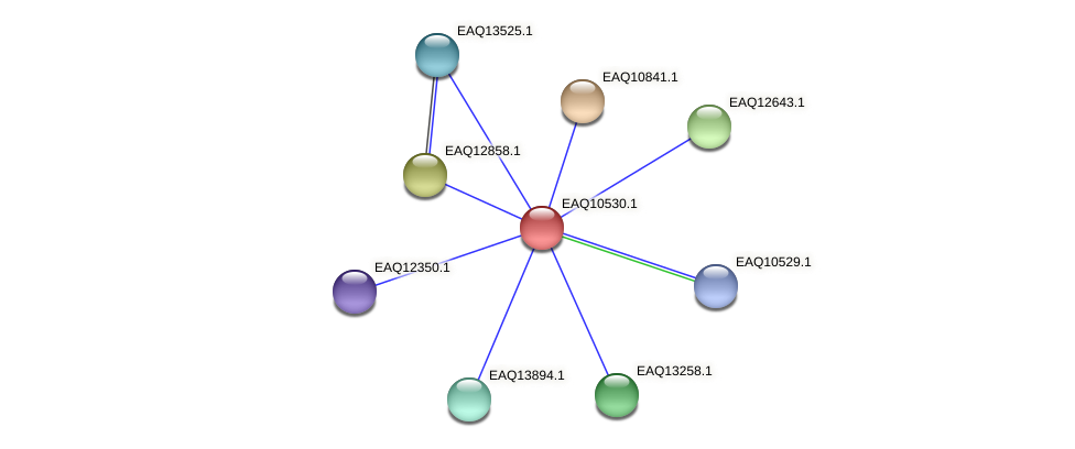 RB2654_00035 protein (Maritimibacter alkaliphilus) - STRING interaction network