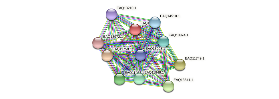 RB2654_00155 protein (Maritimibacter alkaliphilus) - STRING interaction network