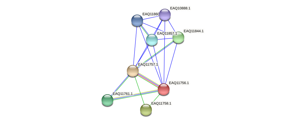 RB2654_00180 protein (Maritimibacter alkaliphilus) - STRING interaction network