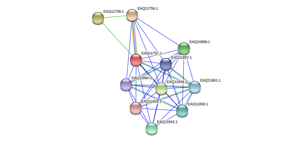 RB2654_00185 protein (Maritimibacter alkaliphilus) - STRING interaction network