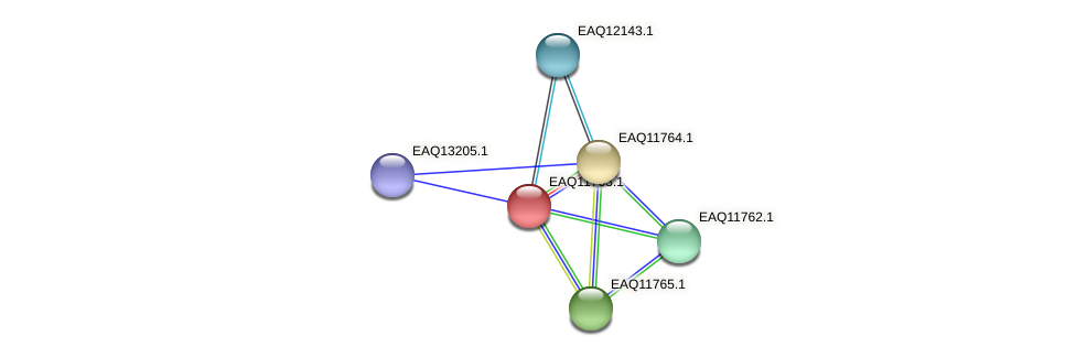 RB2654_00215 protein (Maritimibacter alkaliphilus) - STRING interaction network